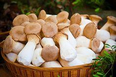 Comment préparer les champignons ? (avec images) | Champignons farcis, Champignon, Alimentation