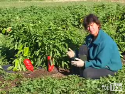 Helen Atthowe of BioDesign Farm describes using a living mulch to achieve slow release fertility