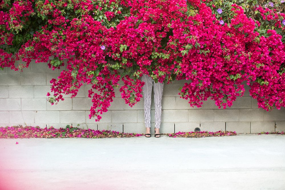 Bougainvillea / shop a house in the hills