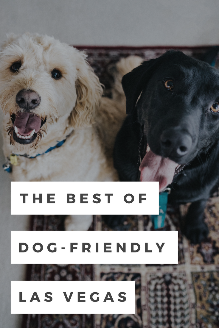 A Few Of The Best Dog Friendly Places In Las Vegas According To A Local Dog Friends Dogs Dog Best Friend