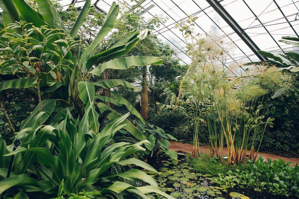 The University of Dundee Botanic Garden | Dundee, Gardens and Plants