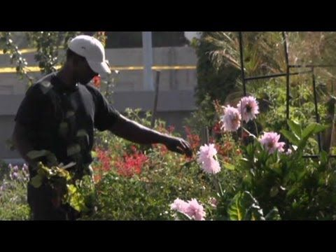 Guerilla Gardener In South Central La