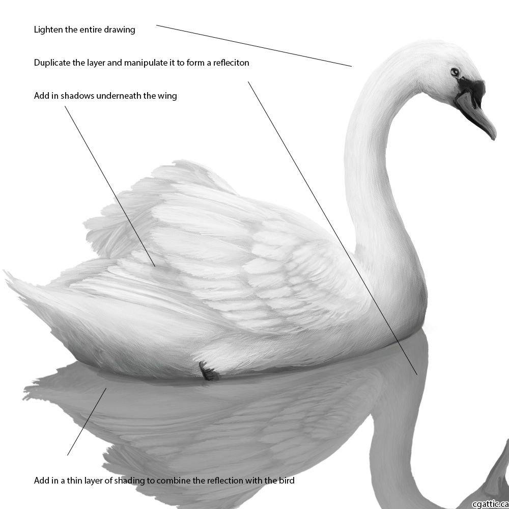 how to draw a swan step 4 draw lighting and shadows right on the original