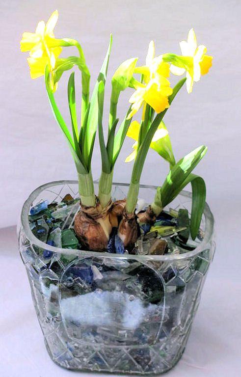 cultivar bulbos en casa   desde el jardín   tips   pinterest