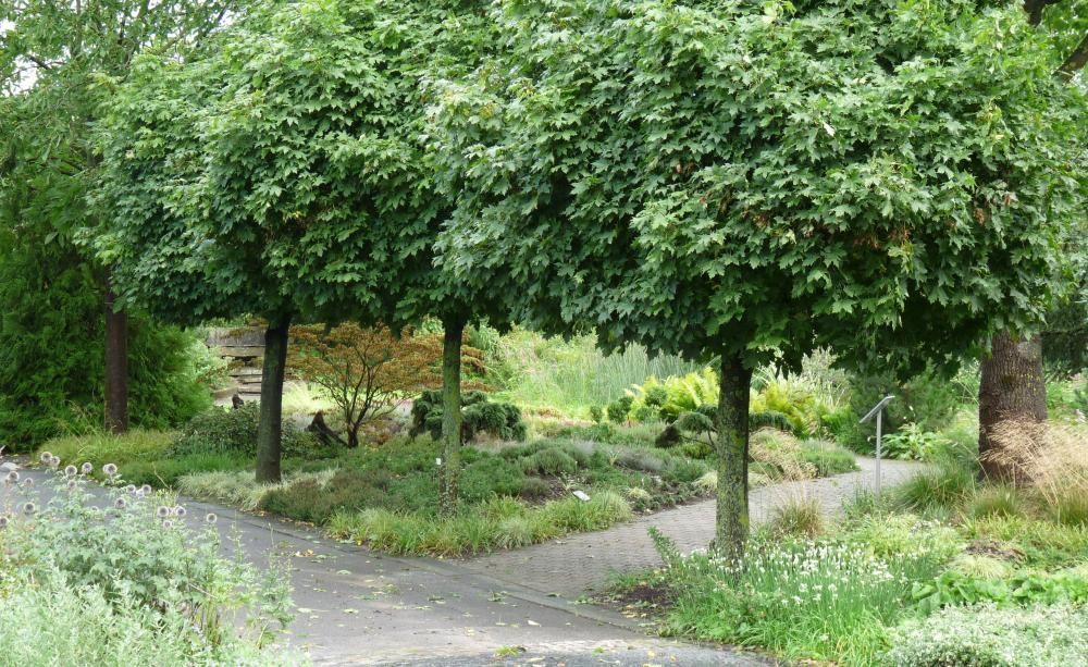 Hausbäume Für Kleine Gärten Garten Garden Landscaping Garden