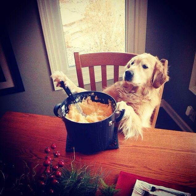#Comunicazione Culinaria. Quando la colazione rimane sempre il pasto più importante. Tutti a tavola! #dog #dogs #animal #breakfast #hungry