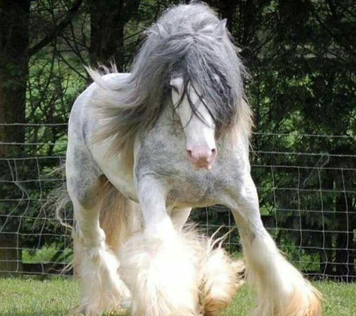 Long Hair Horse.
