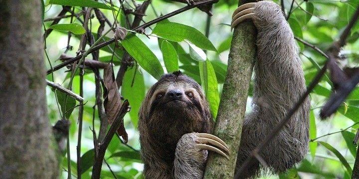 Wildlife, Manuel Antonio National Park, Costa Rica