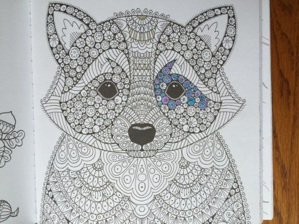Animal Kingdom Colouring Raccoon : Raccoon in wonders of creation coloring book #giveaway