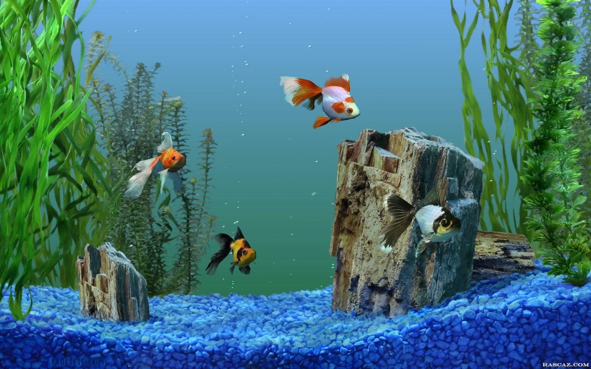 Aquarium Fish Pictures Wallpaper Aquarium Live Wallpaper Aquarium Screensaver Free Animated Wallpaper