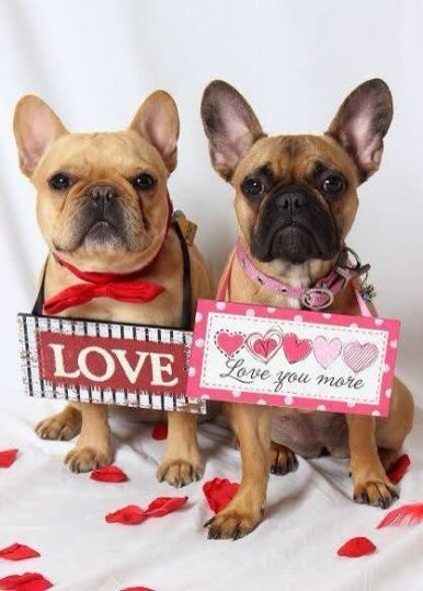Love You Love You More French Bulldogs On Valentine S Day