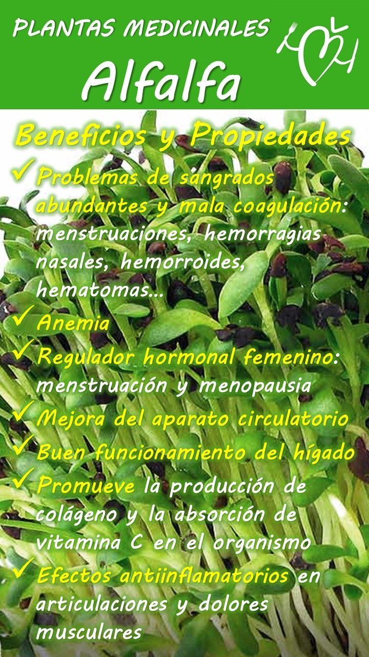 que hierba medicinal pierde peso