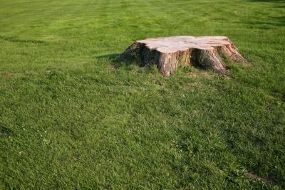 What Kills Unwanted Hedges And Bushes With Images Planting Grass Kill Tree Roots Tree Stump