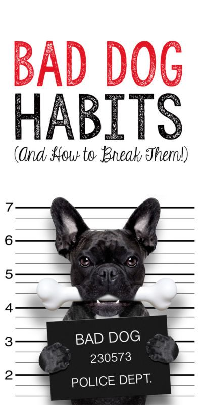 5 Bad Dog Habits And How To Break Them Dogs Dog Training