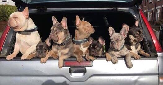 Police Have Launched An Appeal To Find Six Puppies That Have Been