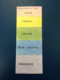 Cards {and} Cardigans: Organization of Life Foldable   Bill Nye ...