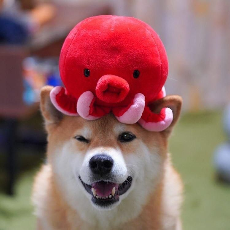 Marutaro Octopus Hat Best Hat Cute Dogs Cute Baby Animals Funny Cats And Dogs
