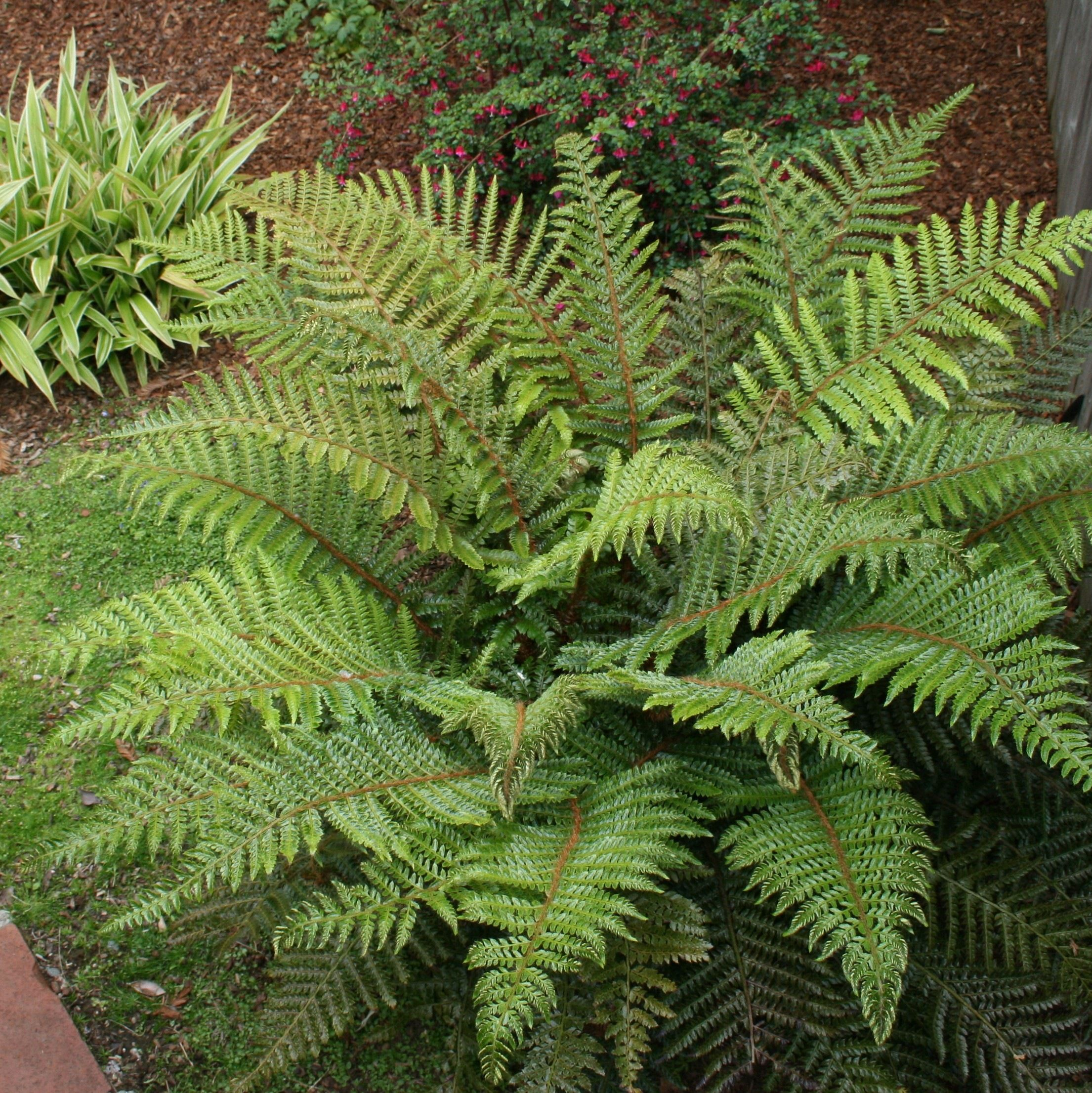 Coastal Gardening: Shade-Loving Plants for the Sea Coast   Plants ...