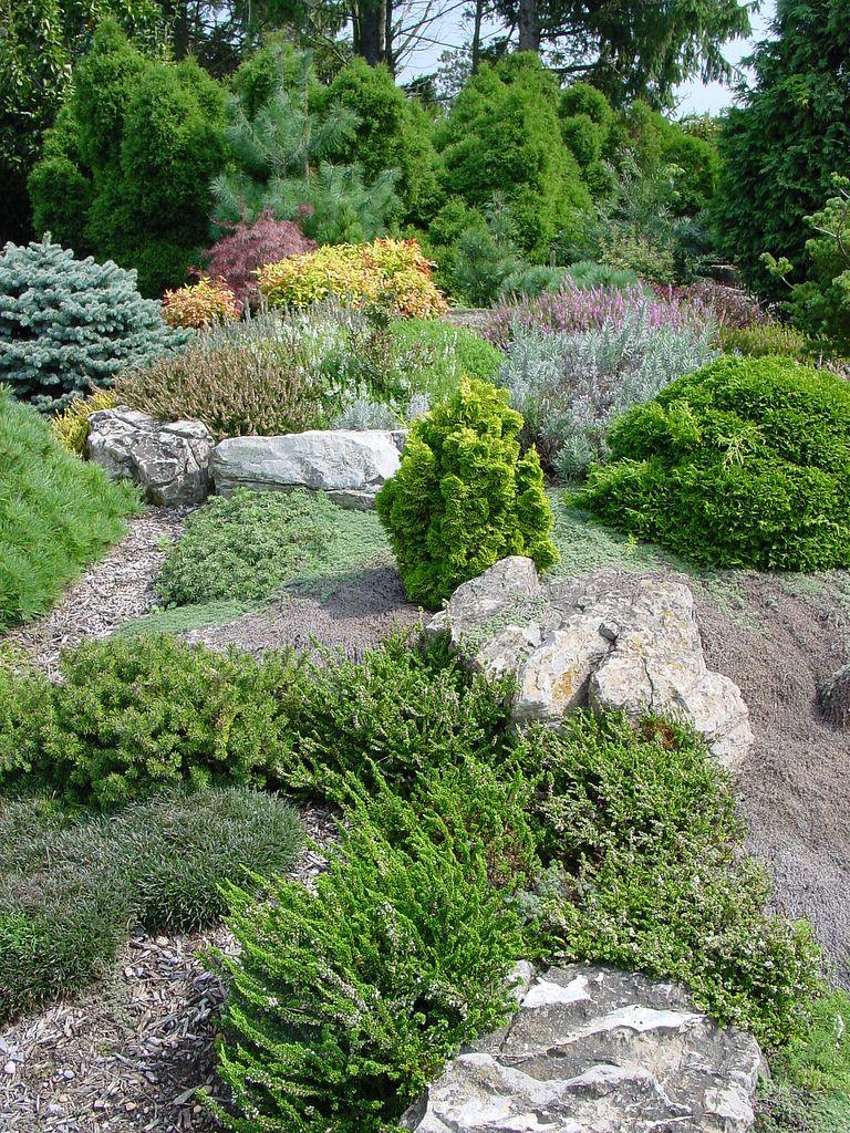 rock garden   dwarf conifers