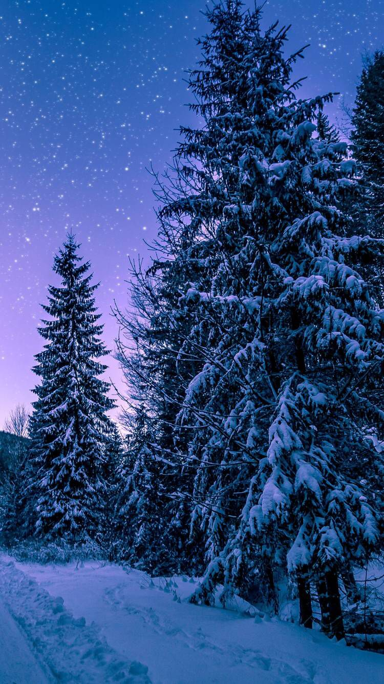 Snowy Night Trees Winter Snowy Forest Photos Of The Week Snow Images