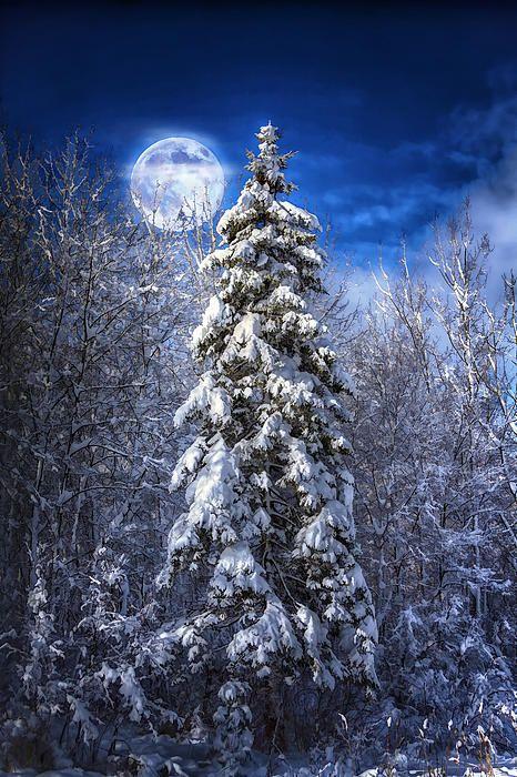Christmas Tree Bangor Maine