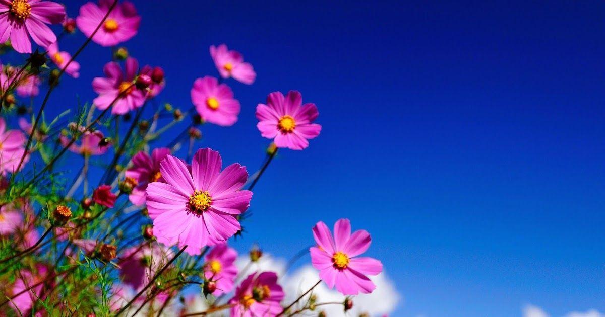 Full Screen Flower Wallpaper Hd Fullscreen Hd Wallpapers Free Download Pixelstalk Net Download 55 Sp Gambar Selamat Pagi Selamat Pagi Cantik Gambar Bunga