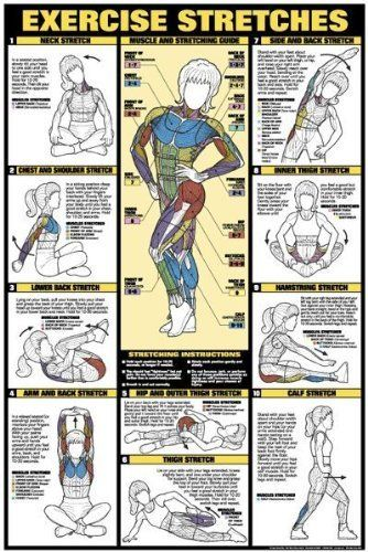 Exercise Stretches 24 X 36 Laminated Chart by Fitnus Chart Series, http://www.amazon.com/dp/B000UTL8Y8/ref=cm_sw_r_pi_dp_ml6esb1SEQAYC