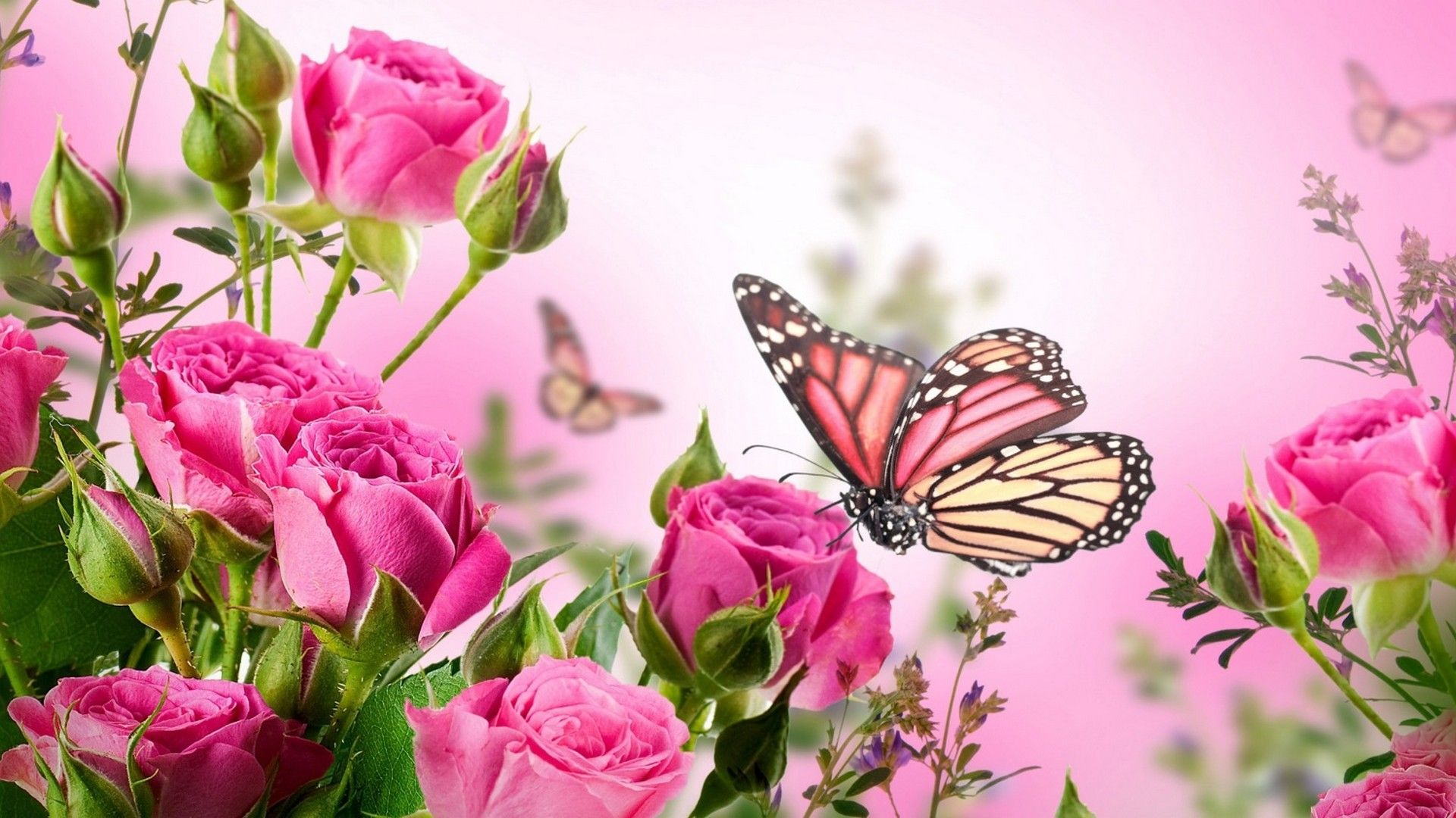 Pink Butterfly Desktop Wallpaper