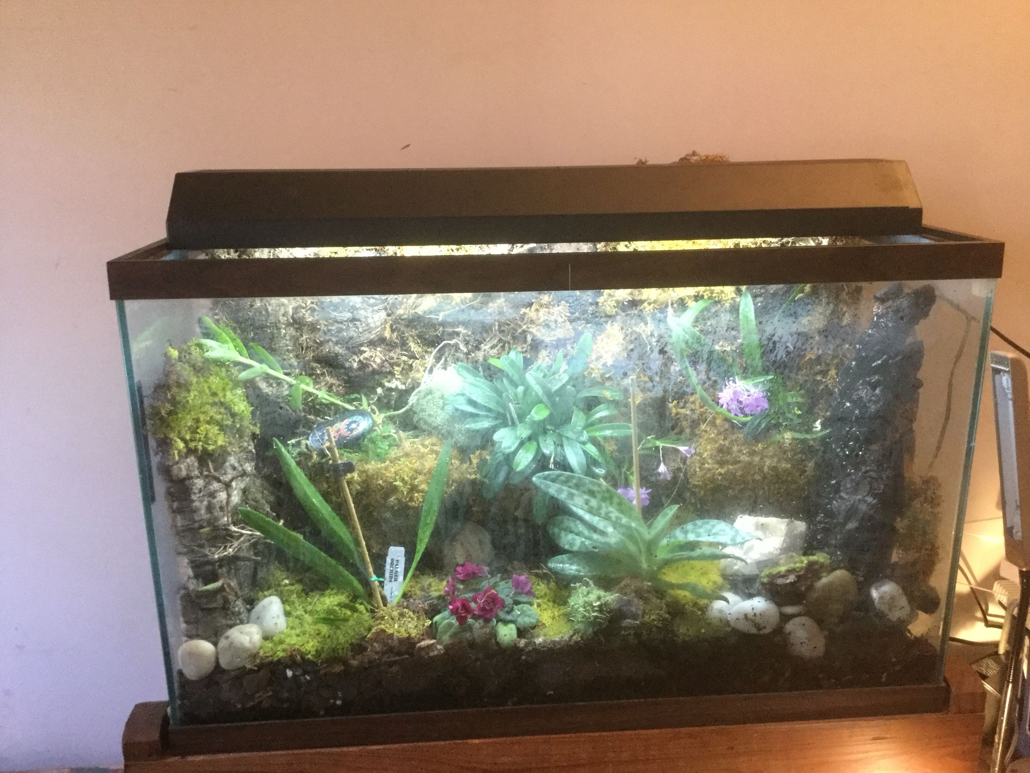 Orchidarium in my old fish tank back wall made with great for Waterfall fish tank