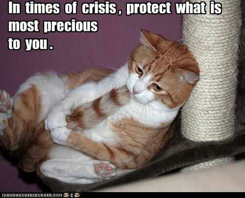 In Times Of Crisis Protect What Is Most Precious To You Funny Cat Memes Cute Cats Cat Jokes