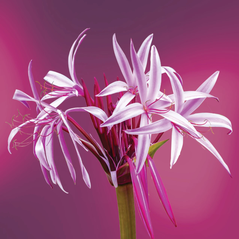 Gamechanger Mist In 2020 Flower Essences Mists Yarrow Flower