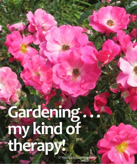 Gardening kind of therapy featuring flower carpet pink kind of therapy featuring flower carpet pink supreme mightylinksfo Gallery