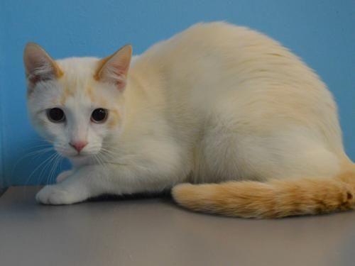 Tinsel Humane Society Adoption Kittens