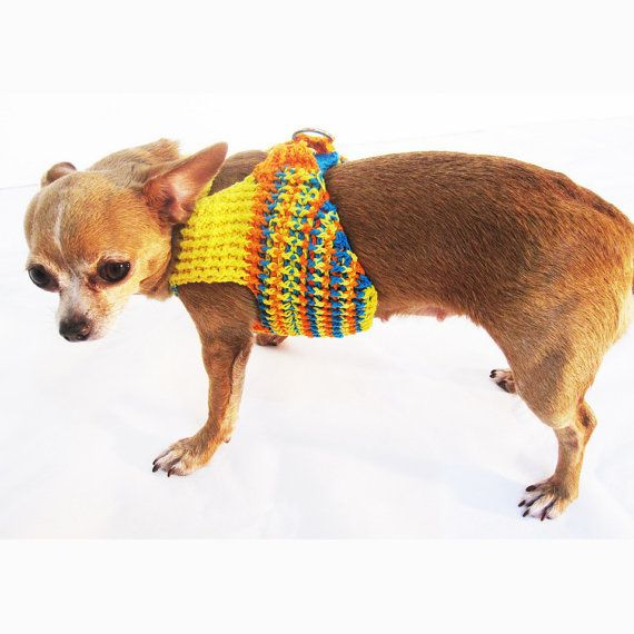 Adorable Dog Strap Harness For This Spring And Summer Season This