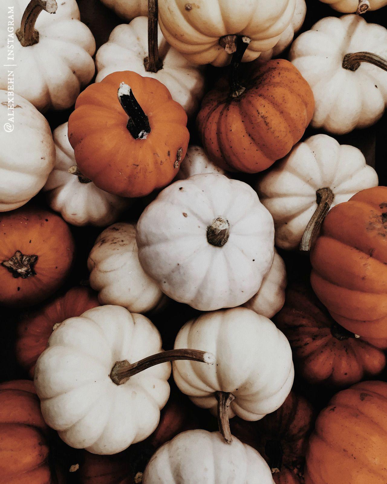 🍂Queen Of The Pumpkin Patch🍂