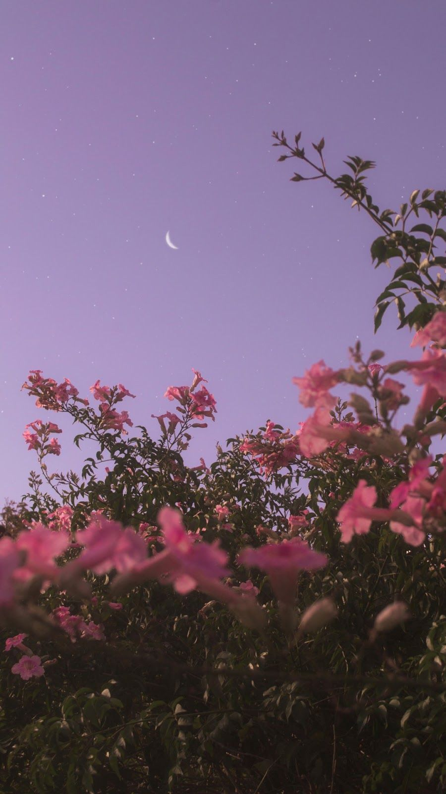 Flower under night sky wallpaper iphone android
