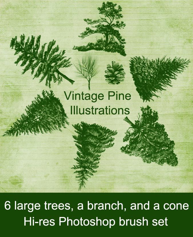 Scrapbook Resources Freebie Vintage Pine Tree Illustrations Photoshop Brush Set