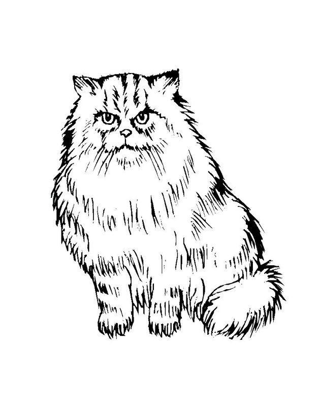 Dibujo Para Colorear Gato Persa Imprimir O Colorear En Línea