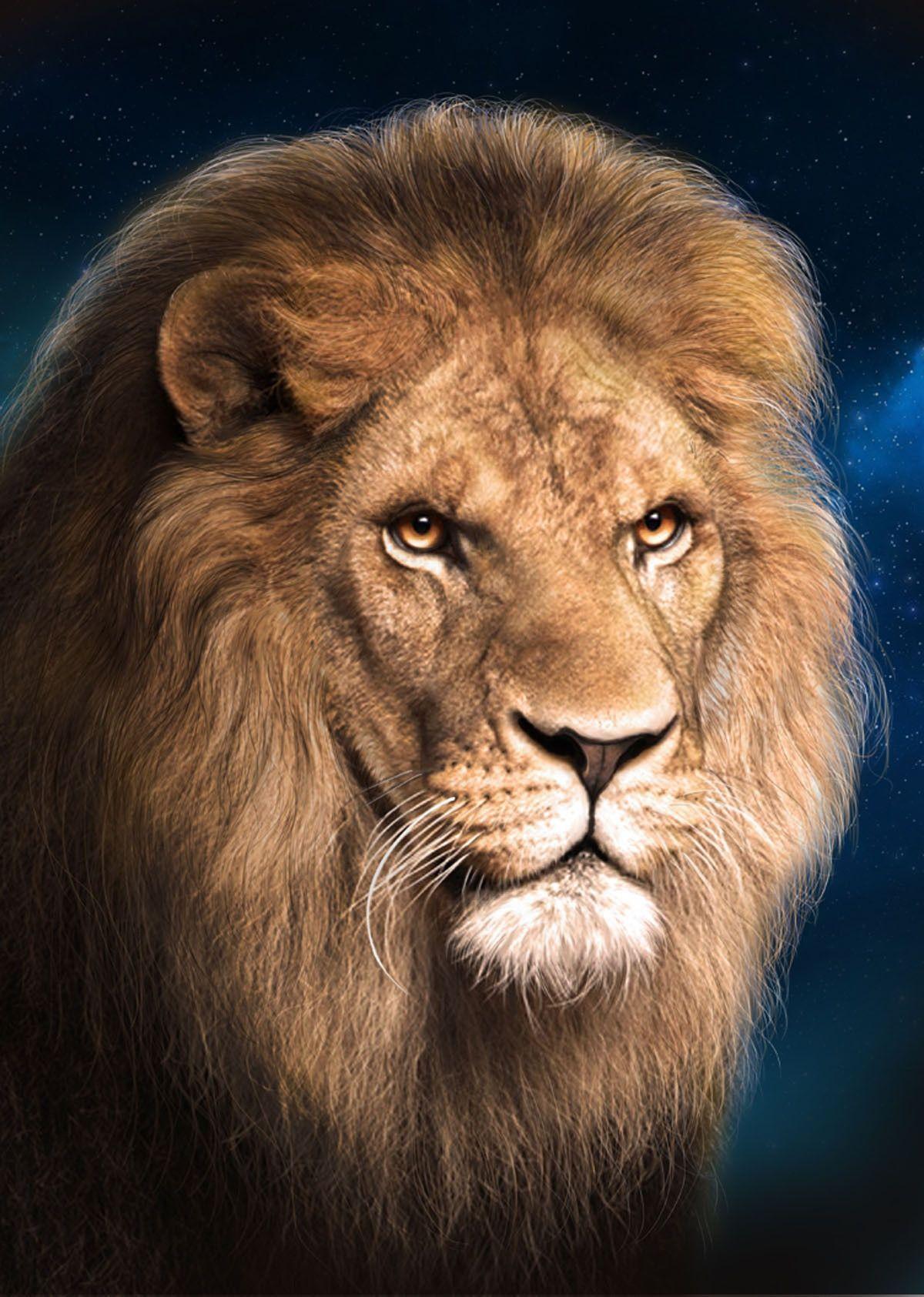 3D Lenticular Magnet: Lion Face | Products | Pinterest | Leones ...