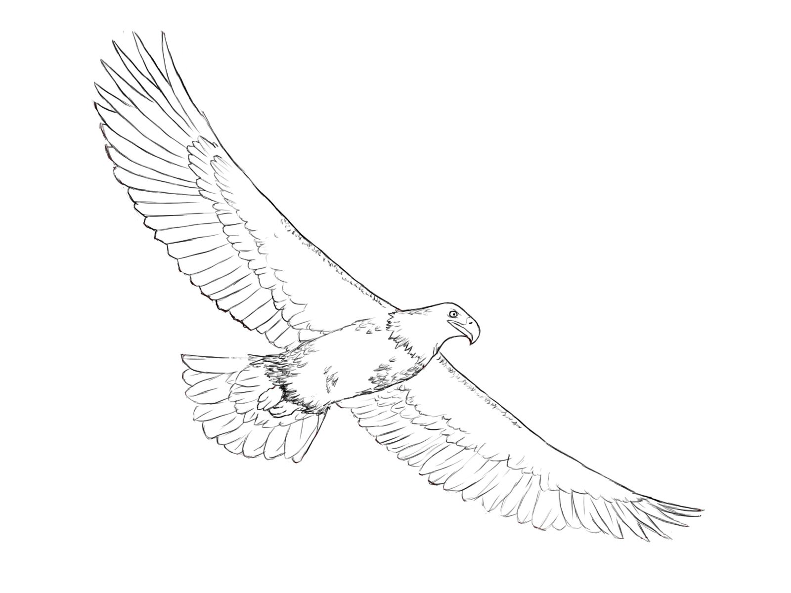 How To Draw An Eagle Eagle Drawing Drawings Paper Drawing