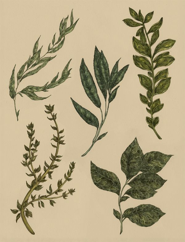 herbs72-700w.jpg