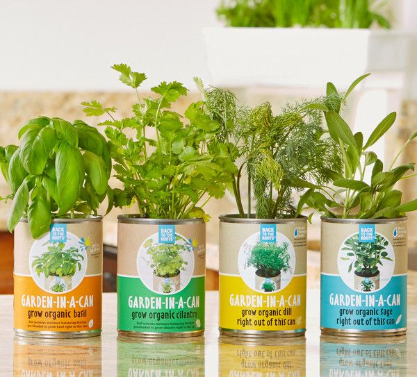 Creating Our First Vegetable Garden Advice Please: Stocking Stuffers!! Ready To Grow Cans Make It Fun And