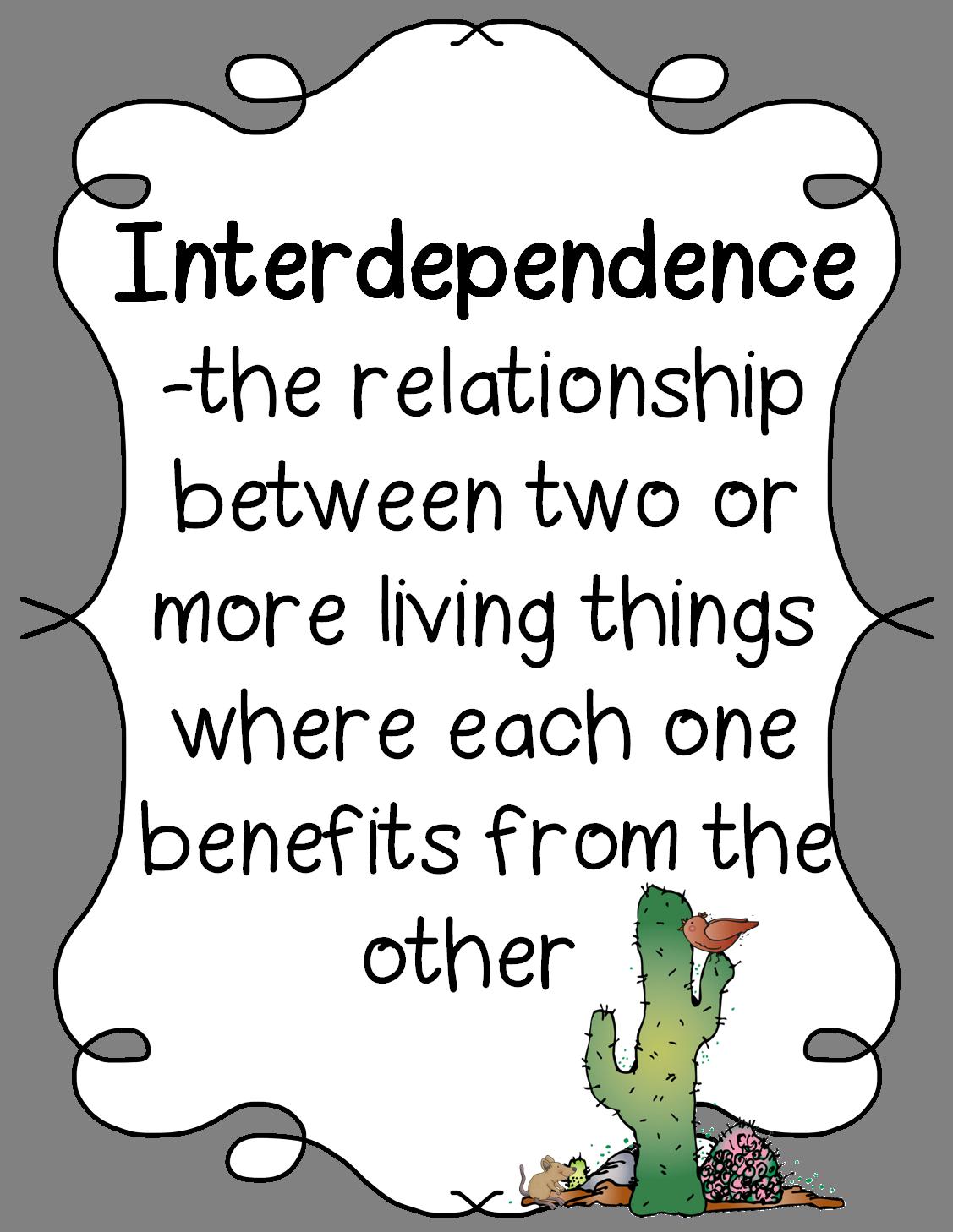 Interdependence Terrariums And Cactus Hotel