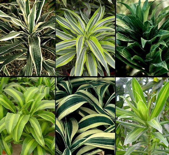 encuentra este pin y muchos ms en plantas tropicales de