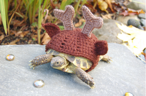 Knit Hat 陸ガメ カメ ペット
