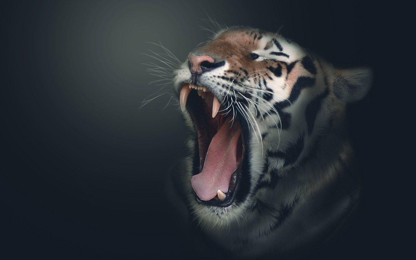 Tigers Hd Wallpapers | Wallpapers Top 10 | Tiger ...