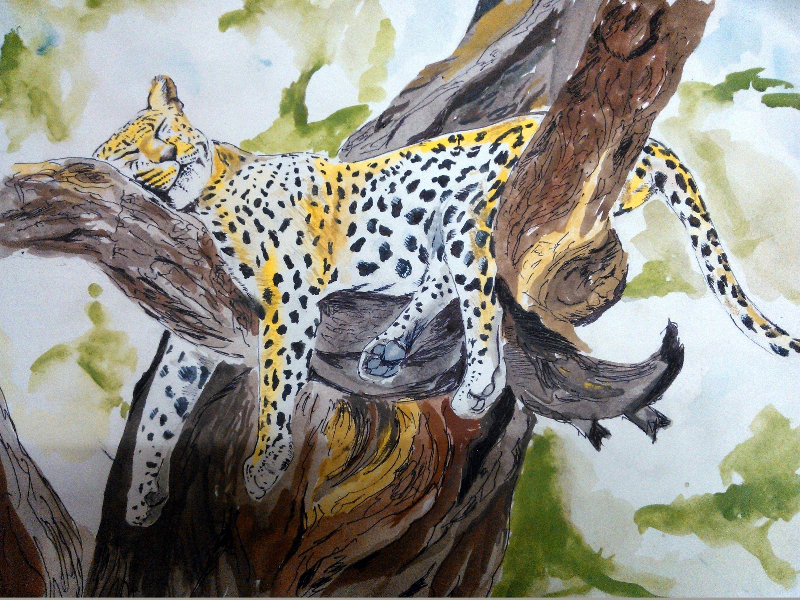 a sleeping cheetah paintings pinterest cheetahs and paintings