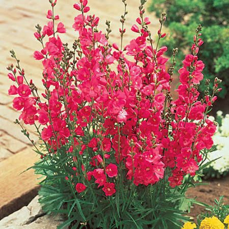 Full sun zone 7 plants perennial google search knoxville yard full sun zone 7 plants perennial google search mightylinksfo