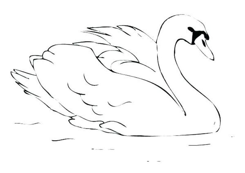 Swan Coloring Page Swan Is One Of The Beautiful Animals That Is Also A Symbol Of Loyalty This Swan W Bird Coloring Pages Animal Coloring Books Coloring Pages