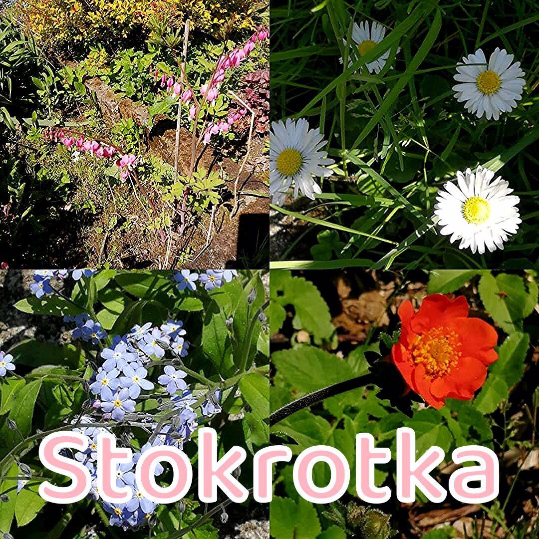 """Polubienia: 1, komentarze: 0 – Kasia Hajduk (@imaginarium2015etsy) na Instagramie: """"#spring #flowers #wiosna #kwiaty #serduszka #stokrotka #niezapominajki #kuklik"""""""
